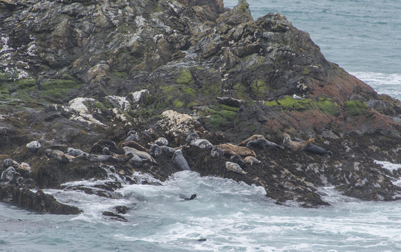 Kitterland is the small island in the Sound and is ideal as a sanctuary for seals. I counted over 50.